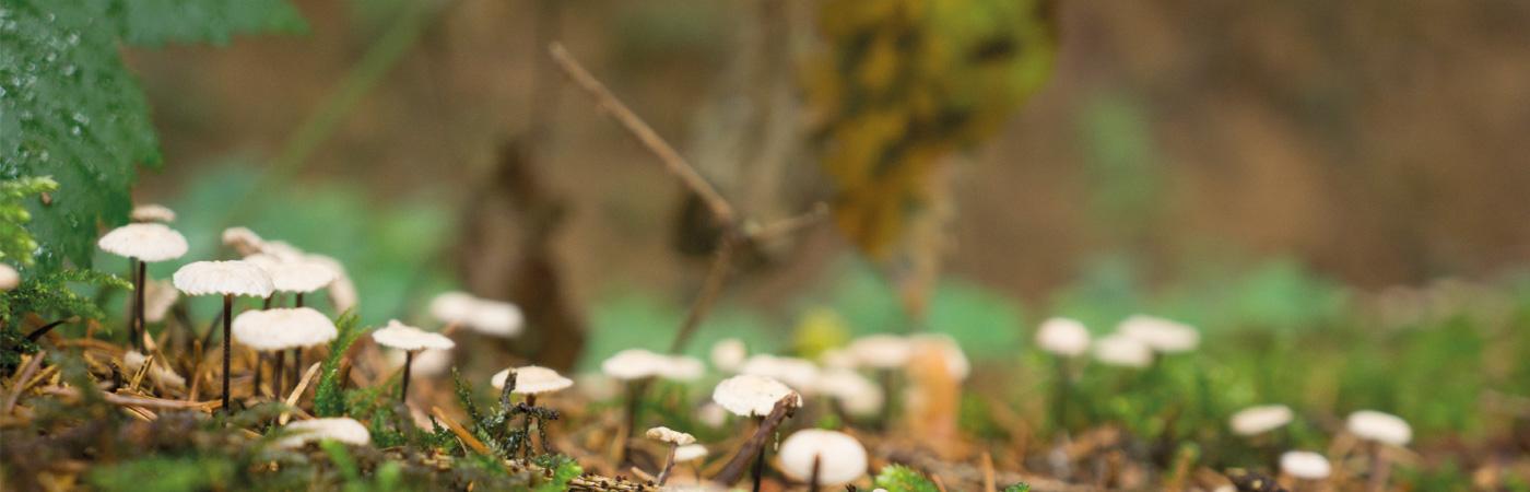 «De Wald isch niä zweimol de glich, weil immer öpis wachst.»
